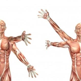 Analisi muscolare nei movimenti della spalla